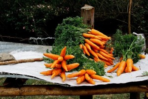 carrot-tips